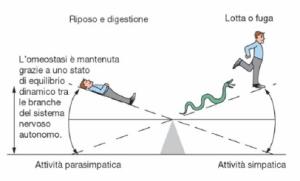 Omeostasi SN